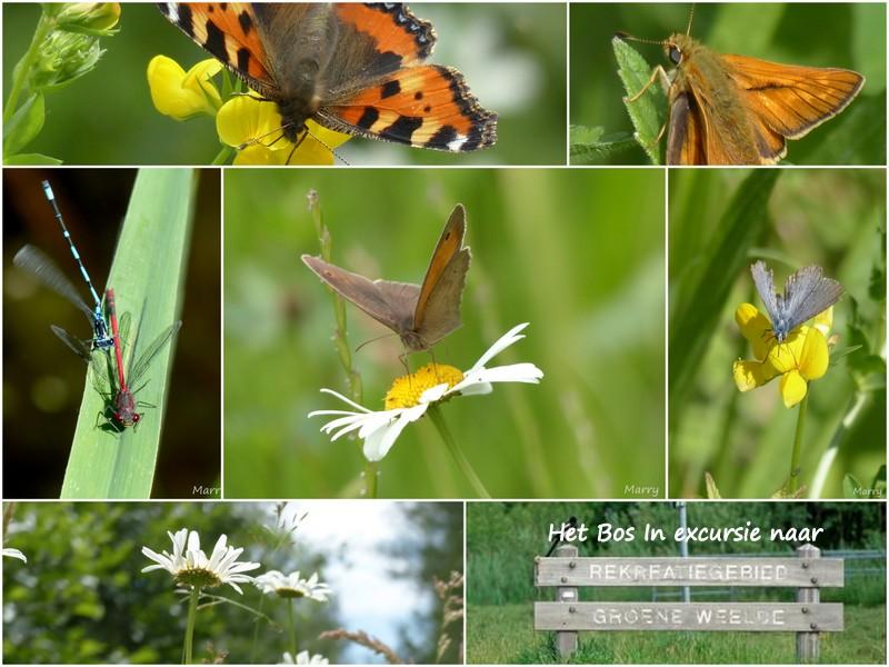 1-17-6-10 GW vlinders